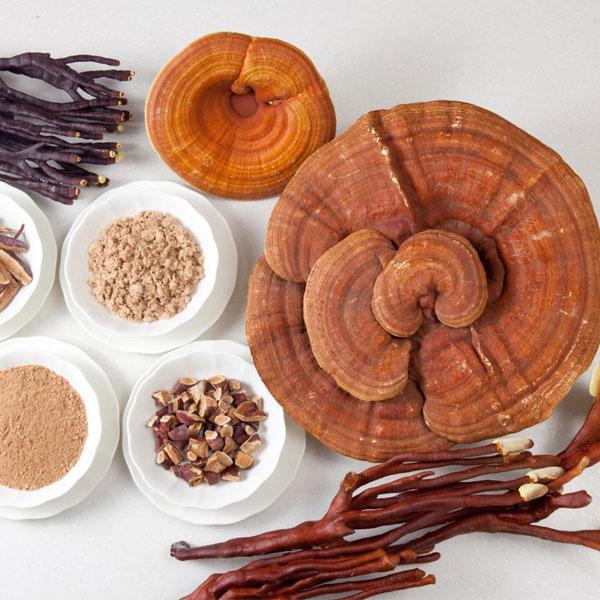 Tác dụng của nấm linh chi đến sức khỏe