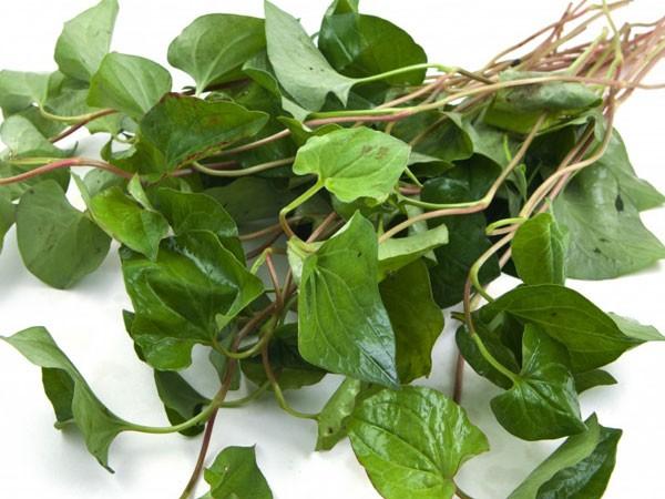 3 loại thảo dược chữa bệnh trĩ nặng