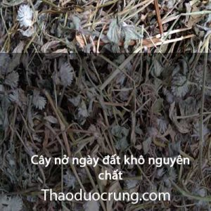 Cây nở ngày đất khô nguyên chất